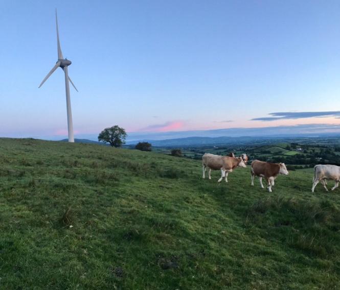 Community-Power-1 cows